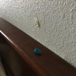 Chewing gum stuck to the top of the headboard. Really.