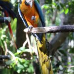 One of the many colorful parrots