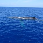 Whales all around our boat