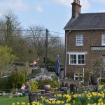 Spring Daffodils and rear of Grand Junction Arms