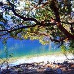 arrayanes en el Lago Steffen