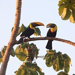 Toucans, from restaurant