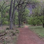 Grotto Trail - in Zion National Park