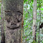 A jungle walk met by a friendly face