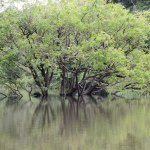 The water levels change throughout the year. An incredible sight canoeing past these trees!
