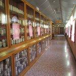 Esapolis - Museo Vivente degli insetti Photo