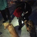 Friendly lovable dogs