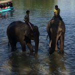 The elephants enjoying water