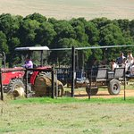 Tractor rides for the bride or your guests