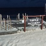 Protected Turtle Hatchery