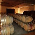 Photo of Le vigne e i falo