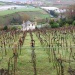 vistas terraza viñedos
