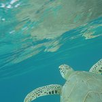 Get up close and personal with sea turtles while snorkeling (but don't touch!)!