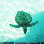 Fowl Cay Resort Foto