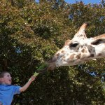 Let your explorer hand feed a giraffe at Naples Zoo!