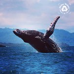 Our Humpback Whales hang out right at our rich coast!