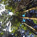 Photo of Borneo Guide - Day Tours