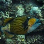 Photo de Diving Station - Reef Villa