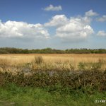 Looking across the reed beds at Stodmarsh
