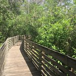 Boardwalk in Lettuce Lake walkable from hotel