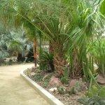 Foto de Springs Preserve