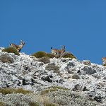Ibex up on the flank of Mount Moroma