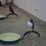 Birds of Prey Homestead