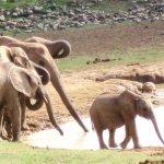Addo National Elephant and Wildlife Park