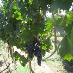 The visit coincided with the first day of picking for the season