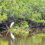 egret at an inland pond