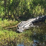 One of the big gators we saw