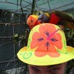 Colourful Parrots