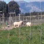 Drakenstein Lion Park Foto