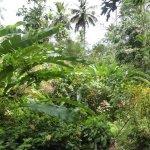 a lush vegetation