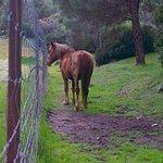 Animales sueltos en su hábitat natural. Caballos, ciervos, toros...