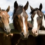 Home Ranch Horses