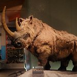 Woolly rhino exhibit