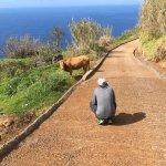 Photo of Madeira Native Motion