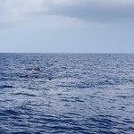 Foto di Wild Hawaii Ocean Adventures (WHOA)