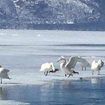 Photo of Lake Kussharo