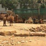 Riyadh Zoo Foto