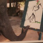 Here is the elephant drawing
