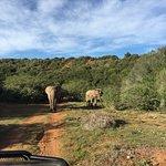 Foto de HillsNek Safaris, Amakhala Game Reserve