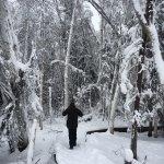 Exploring the Winter Wonderland