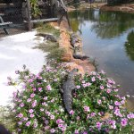 Rocks and Flowers and Gators oh my!