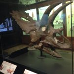 Photo of University of Michigan Museum of Natural History