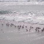 The beach at Jalama Beach Park, Santa Barbara County, CA.
