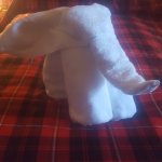 little towel elephant :)
