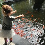 Fish feeding for the little ones every morning.