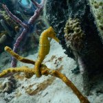 Bocas Dive Center Foto